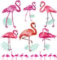 Set of pink flamingoes vector image vector image