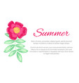 summer theme colorful poster vector image vector image