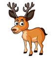 cute deer on white background vector image vector image
