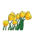 yellow tulips vector image vector image