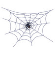 black big spider on web vector image vector image