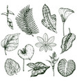 hand drawn tropical plants monochrome set vector image vector image