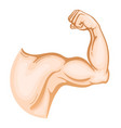 muscular strong hand vector image