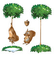 trap for squirrel hang animal and with broken paw vector image vector image
