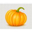 large pumpkin vector image vector image