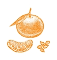 Mandarin Hand Draw Sketch vector image vector image