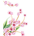 pink spring watercolor blossom flowers with green vector image vector image