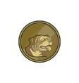 Rottweiler Guard Dog Head Gold Medallion Retro vector image vector image