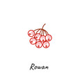 rowan berry icon outline vector image