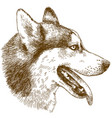 etching of husky dog head vector image vector image