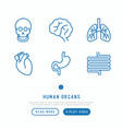 human internal organs thin line icons set vector image