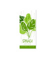 creative hand drawn label with green leaves of vector image vector image