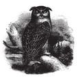 eagle owl vintage vector image vector image
