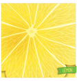 Just lemon background vector image vector image