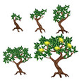 the stages of growing a lemon tree isolated on vector image