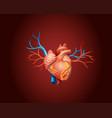 diagram showing human heart vector image