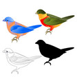 bluebird thrush and tropical bird silhouette vector image