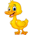 Cartoon funny baby duck posing isolated vector image vector image