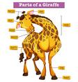 Diagram showing parts of giraffe vector image vector image