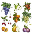 garden fruits with leaves and branches vector image vector image