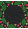 coffee beans berry and leaves drawing frame vector image