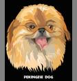 colorful portrait of pekingese dog vector image vector image