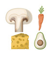 mushroom and carrot and cheese and avocado in vector image