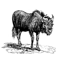 Vintage Black Wildebeest vector image