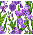 seamless pattern with iris flowers vector image