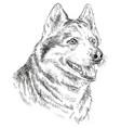 hand drawing portrait of siberian husky vector image vector image