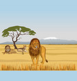 pride lions in the savanna vector image