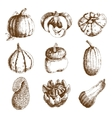 Pumpkin hand drawn icons set doodle vector image
