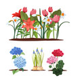 spring garden flowers seedlings gardening and vector image vector image