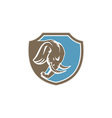 Angry Elephant Head Side Shield Retro vector image vector image