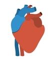 human heart anatomy isolated icon design vector image