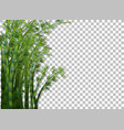 bamboo tree on transparent background