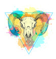hipster animal skull on watercolor background vector image