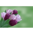 Bouquet of puple tulips vector image