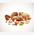 Assorted nuts vector image