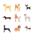 cartoon dog breed set isolated on white background vector image