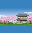 japan traditional house at cherry blossom season vector image vector image