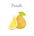 pomelo exotic fruit tropical food icon vector image vector image