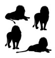 set of silhouettes of lion vector image vector image
