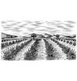 agave field vintage retro landscape harvesting vector image vector image