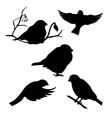Bullfinch set vector image vector image