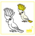 cute cartoon parrot color and outlined on a white vector image vector image