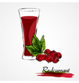 redcurrant juice vector image