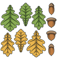 Color acorns and oak leaves vector image vector image