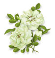 realistic white rose 3d roses vector image vector image