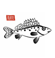 Ruffe black and white vector image vector image